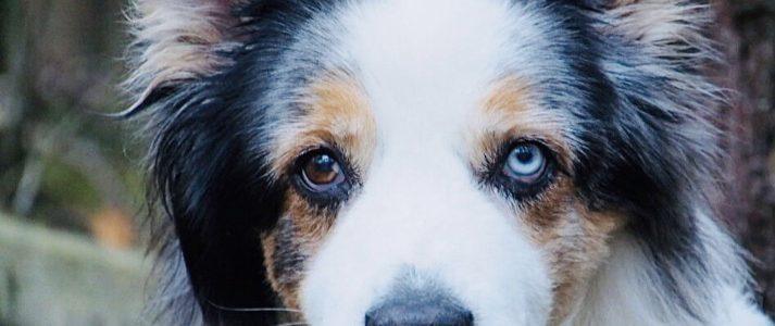 Unsere Adjudanten. Hunde in der Schöpfungsordnung